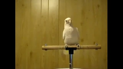 Папагал танцува на Dubstep музика