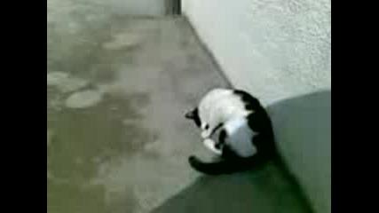 Малко Котенце 2