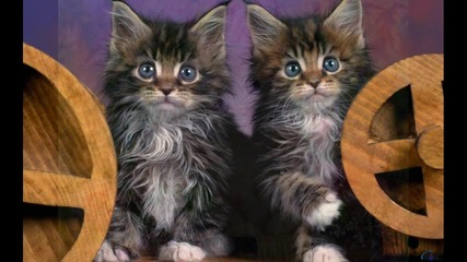 малки и красиви котенца