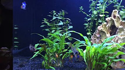 Новият ми аквариум!!!