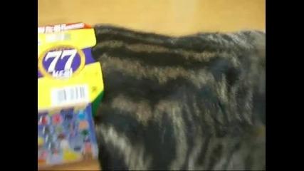 Смях!!! Вижте в колко малки кутии се мушка тази котка