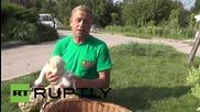 Russia: New-born white lion QUADRUPLETS explore at Taigan Safari Park