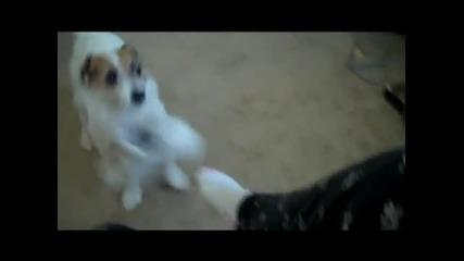 Полезни Кучешки Трикове От Кучето Jesse