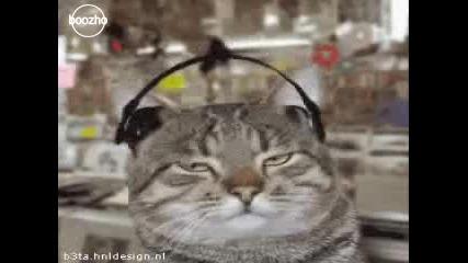 Как котките слушат музика... смях!!
