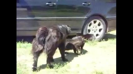 Кучета Блюстат и Разтървават Скарани Котища