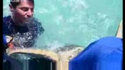 Маркиране и сърфинг с морска костенурка