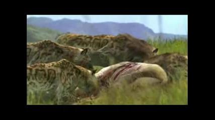 spoke - Животни отровни + текст