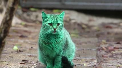Вижте зелената котка от Варна , която измуми света
