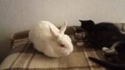 Пухчи с котетата Бери, Мери и Стюпи ;)