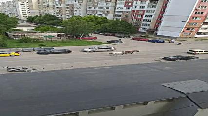 Коне вървят свободно по столичен булевард