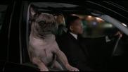 Пеещо куче!