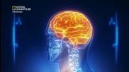 Изпитай мозъка си - Не забравяй тялото си