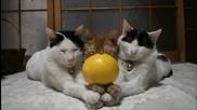 Най - търпеливите сладки котенца .