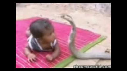 Ylanla Oynayan Bebek Video Korkun Kobra wwwcanparecom