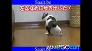 Коте срещу скоч