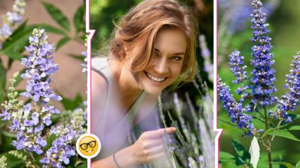Полезните свойства на една от най-големите приятелки на жените сред билките