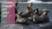 Cleaning a port for a colony of sea lions in Kamchatka