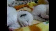 small cats (малки котета)