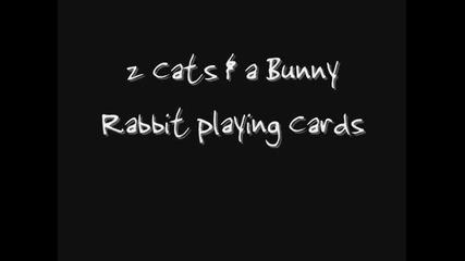 Заека добре разбира картите !!