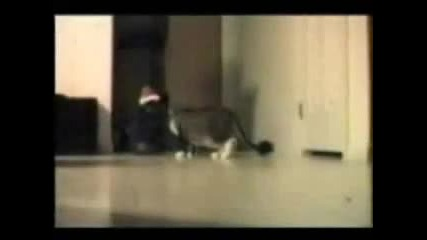 Funny Cats * Smqh *