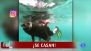 David Bisbal y Rosanna Zanetti se casan / Reportaje Corazon 16/01/2018