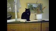 черно коте 9.11.2009 Dsci0022