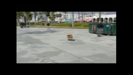 Куче Скейтър