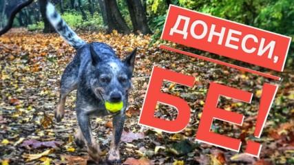 Как да науча кучето да носи играчка