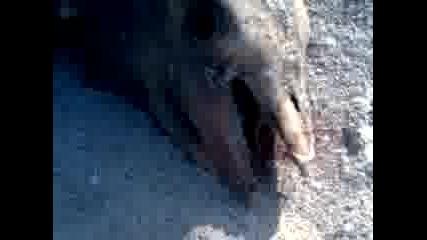ужас морето край обзор изхвърли делфинче