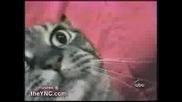 Котка Се Недъгави И Издава Смешни Звуци