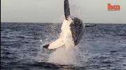 Летящи акули