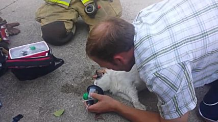 USA: Firefighters resuscitate cat after rescuing it from burning home in Iowa
