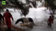 Пожарникари спасяват кон от замръзнало езеро