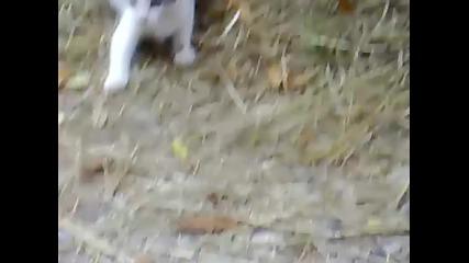 Котка яде къртица