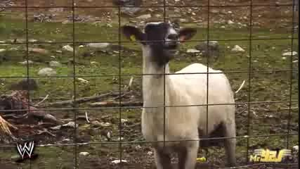 Brock Lesnar Screams Like A Goat - Wwe Funny Moment 2014 Com