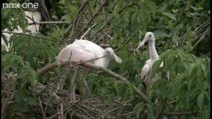 Птици избухват на метъл