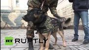 Руските полицейски кучета вече са със бронежилетки