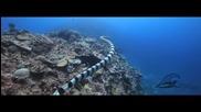 Подводния Свят на Тонга