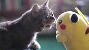 Любопитно котенце се запознава с Пикачу