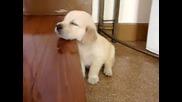 Куче почти заспива право