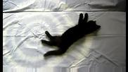 л - черно коте 3.08.2009 Dsci0023