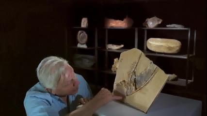 Най-съвършената вкаменелост на птерозавър