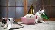 Котки След Празничното Парти