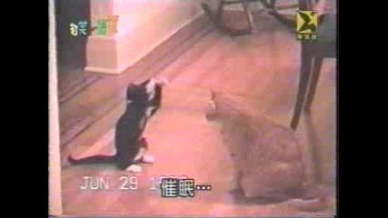 Котка Напада