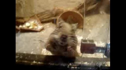 Лудата Мишка