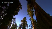 Sunrise Earth - Sequoia Light ( Part 1 / 5 ) * H D *