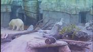 Животните в зоопарковете в Америка