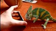 Хамелеон срещу Iphone. Много Смях!