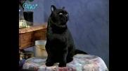 Sabrina,  the Teenage Witch - Събрина,  младата вещица 4 Сезон 16 Епизод - Бг Аудио