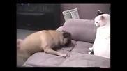 Куче щурее, котка се нерви - смях!